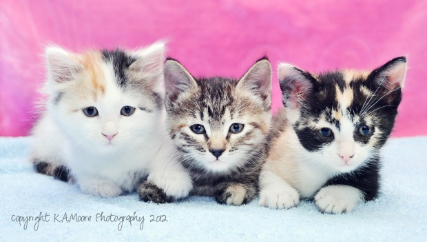 Just a couple of cute reasons to keep taking photos at the rescue... Copyright K.A.Moore Photography. All Rights Reserved.  Do not copy, download, alter.