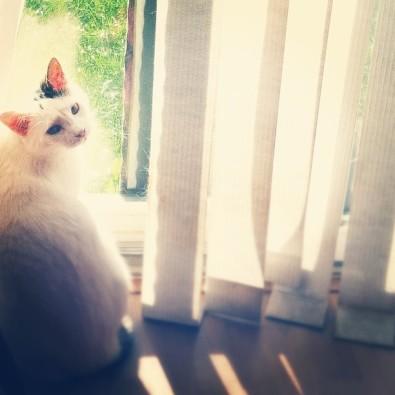 Basking in the light