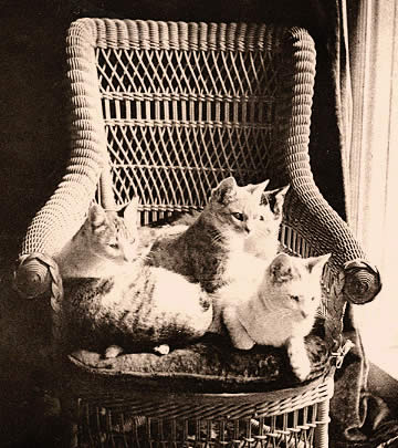 "Mark Twain's cats ""Wide Awake"" photo by Elmira photographer Elisha M. VanAken, 1887  [Photos from the Dave Thomson collection] ""He would call (the cats) to ""come up"" on the chair, and they would all jump up on the seat. He would tell them to ""go to sleep,"" and instantly the group were all fast asleep, remaining so until he called ""Wide awake!"" when in a twinkling up would go their ears and wide open their eyes."" - Anonymous article titled ""The Funniest Writer on Earth. Some Anecdotes about Mark Twain,"" The Rambler, Dec. 24, 1898."