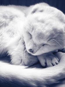 Fast asleep...