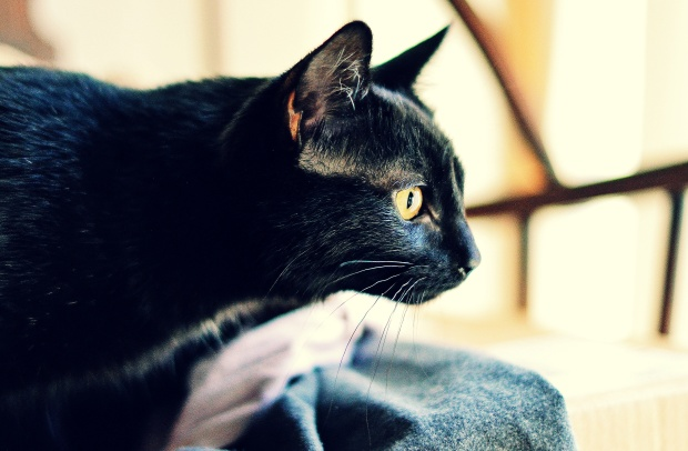 Licorice. Copyright K.A.Moore Photography.