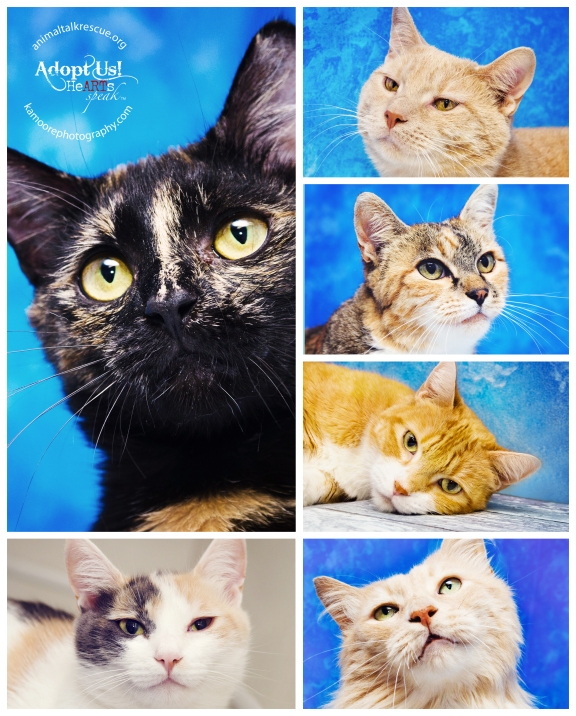 All cats are up for adoption at Animal Talk Rescue! All Images Copyright K.A.Moore Photography.