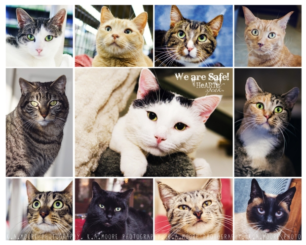 Rescue Pet Photography. Clockwise from top left: Sugarbaby, Zipper, Gigi, Tiggress, Harlequin, Genevieve, Clive, Eli, Cecilia, Pearl. Middle: Emmit. Copyright K.A.Moore Photography. All Rights Reserved.