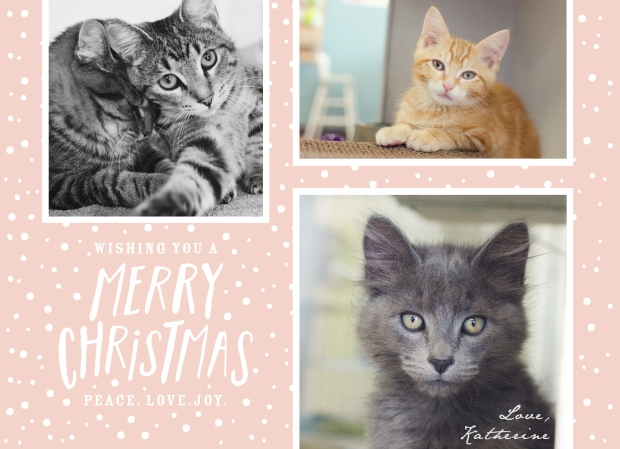 merry christmas from K.A.Moore Photography, Seattle Pet & Lifestyle Photography