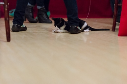 Holly and Ivy, the kittens, were playing the WHOLE time