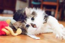 kamoorephotography cat