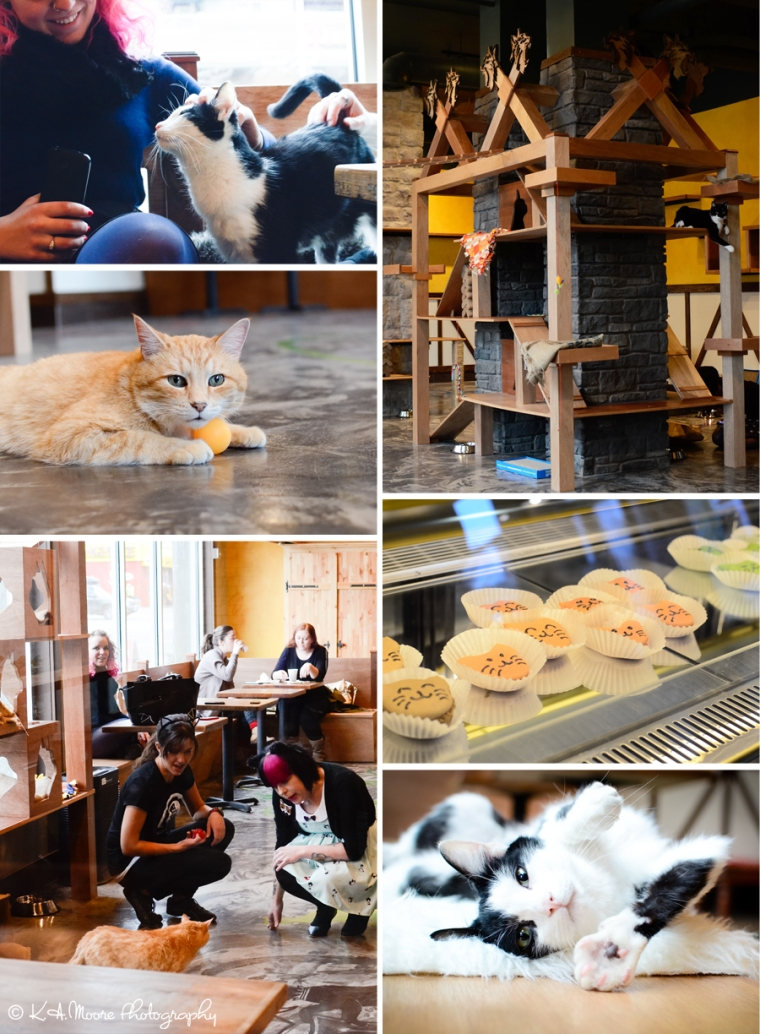 20151218 Seattle Meowtropolitan Soft Opening Blog Board 1