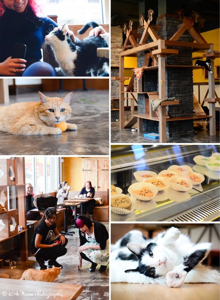 20151218 Seattle Meowtropolitan Soft Opening Blog Board 1