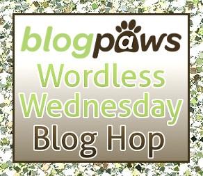 BP_Wordless_wed_Hop_Logo_2014